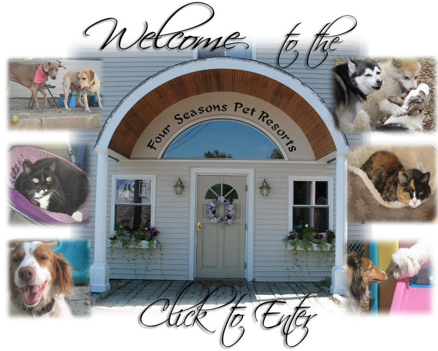 Welcome to the Four Seasons Pet Resorts. Click to Enter.
